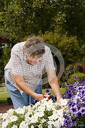 Old women gardening
