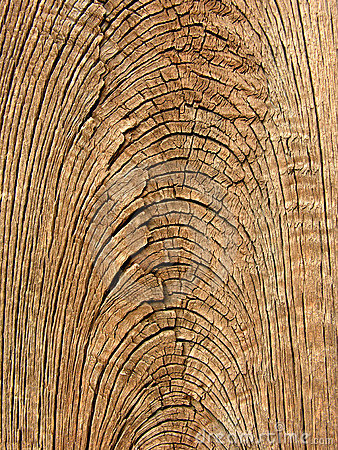 Old wood grain texture