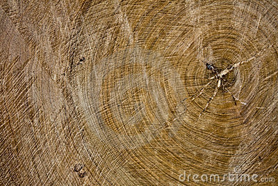 Old wood slice texture