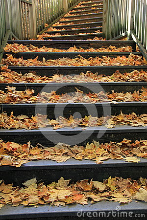 Old wood staircase covered in leaves