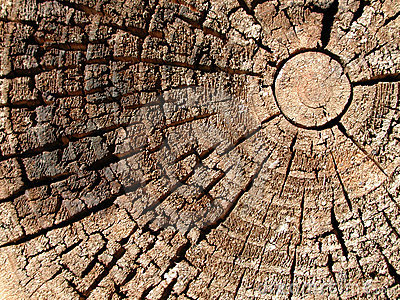 Old Wood Tree Rings Texture