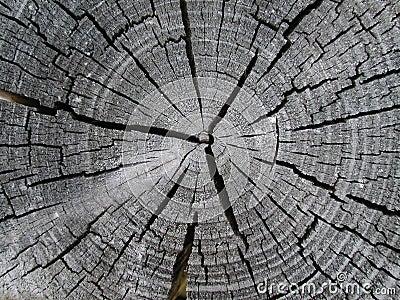Old Wood Tree Rings Texture