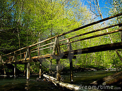 Old wooden bridge in the woods