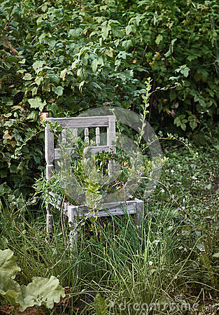 Old wooden chair in wild garden