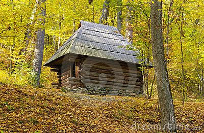 Old wooden house in middle of golden forest