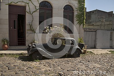 Old wrecked car with plants