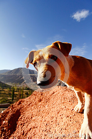 Olhar fixamente do cão