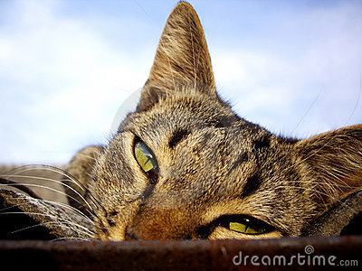 Olhar fixo do gato