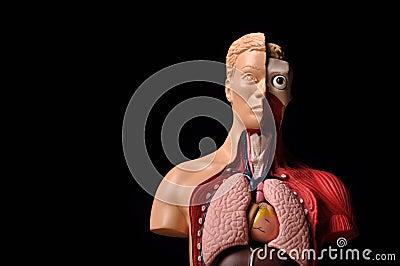 Olhe o corpo interno, anatomia humana