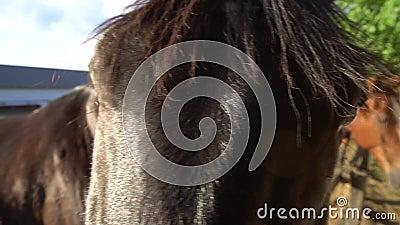 Olho do cavalo video estoque