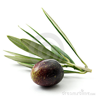 Free Olive Royalty Free Stock Photography - 2676227
