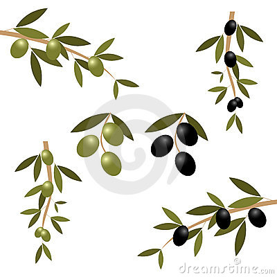Free Olive Branch Stock Photo - 16621790