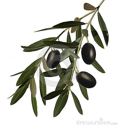 Free Olive Branch Royalty Free Stock Image - 22246356