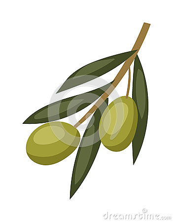 is an olive a fruit organic fruit