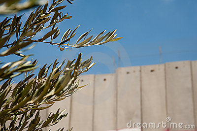 Olive Branches and Israeli Separation Barrier