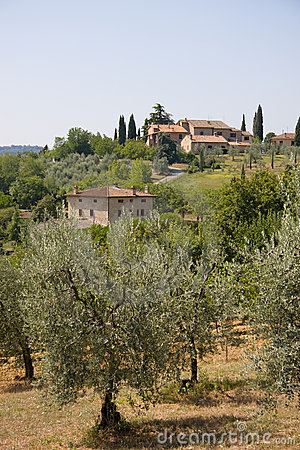 Olive farm in Tuscany