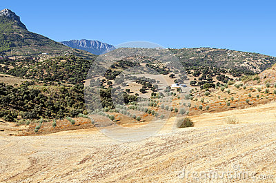Olive grove in the mountains