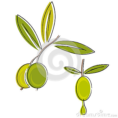 Olive oil vector