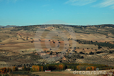 The olive plantations in Andalusia