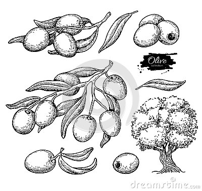 Free Olive Set. Hand Drawn Vector Illustration Of Branch With Food, Tree, Oil Drop. Royalty Free Stock Photo - 95411375
