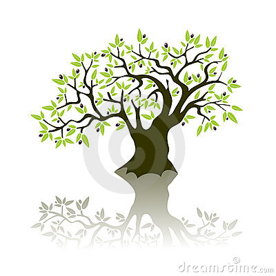 Free Olive Tree Royalty Free Stock Photography - 6719857