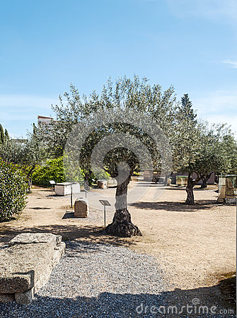 Olive tree with ancient stones
