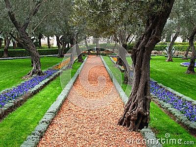 Olive tree garden, Bahai Temple, Haifa, Israel
