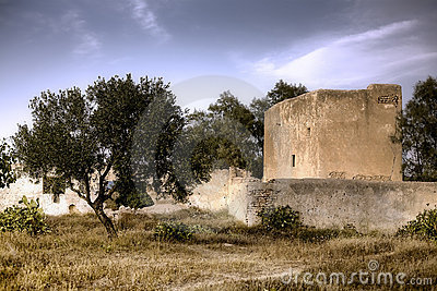 Olive tree HDR