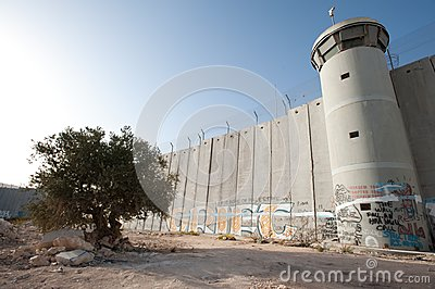 Olive Tree and Israeli Separation Barrier