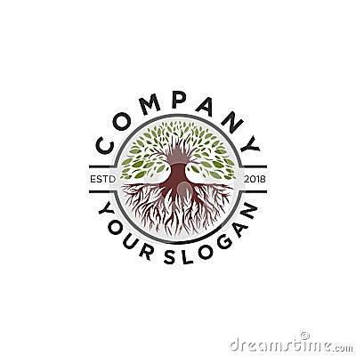Olive tree logo designs , root logo Vector Illustration