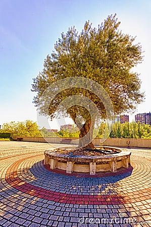 Olive Tree Monument