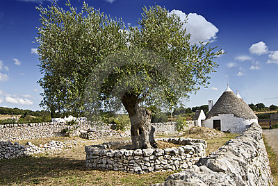 Olive tree and trullo