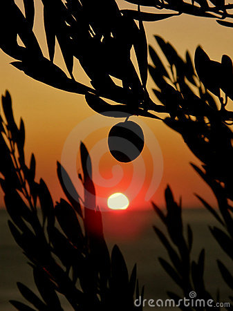 Free Olive Trees In Sunset Royalty Free Stock Image - 14790946