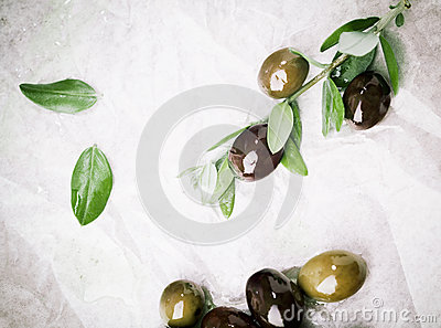 Olives being prepared for culinary use