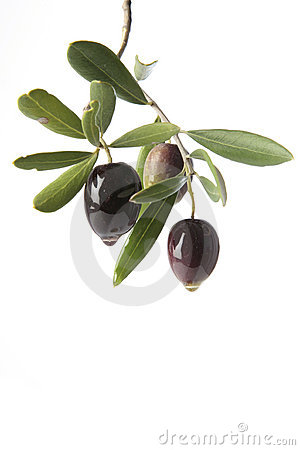 Free Olives Oozing Olive Oil Stock Image - 12175621
