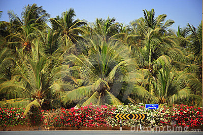 Oman: Lush Salalah