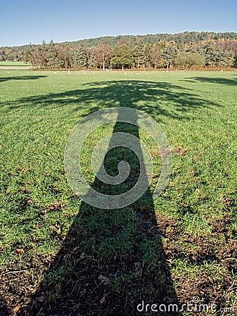 Ombra dell 39 albero attraverso la campagna inglese for Ombra in inglese