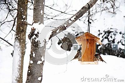 χειμώνας χιονιού σκηνής π&omicro