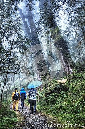 Område för Cilan skogrekreation på Yilan Taiwan