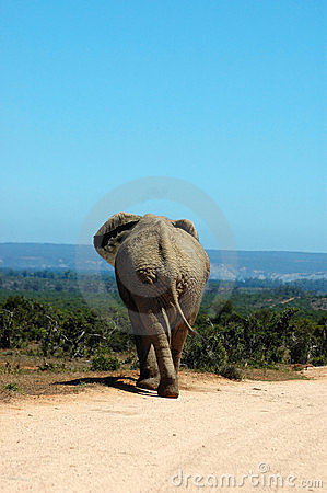 Free On Safari Stock Image - 2157181