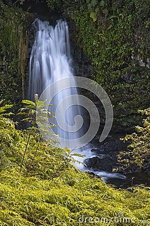 Free On The OK Farms Wailuku River Trail Royalty Free Stock Photos - 4169848