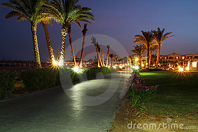 Onder palmen bij nacht