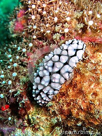 Onderwater fauna