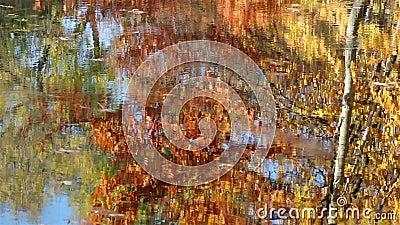Ondulazione variopinta dell'acqua in autunno stock footage