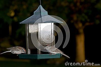 One in the beak