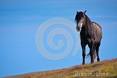 One black horse against the blue sky