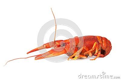 One boiled crawfish