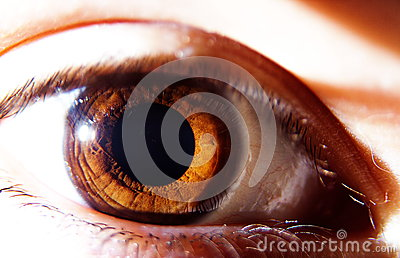 One Brown Human Eye