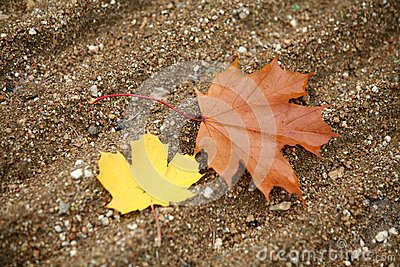 One brown leave