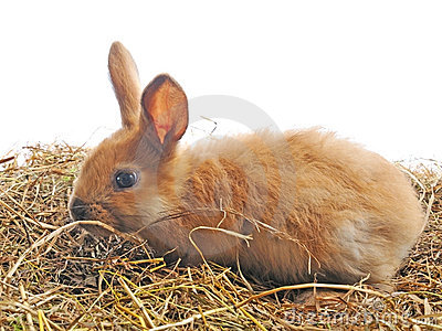 One bunny sit on the hay